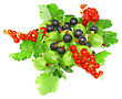 Berry Mix- Red And Black Currant, With Leaf On White Background. Top View. Isolated stock image