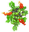 Berry Mix- Red And Black Currant, With Leaf On White Background. Top View. Isolated