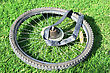 Bicycle Wheel On Green Grass. stock photo