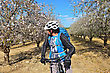 Bicyclist Admires Blossoming Almond In A Grove stock photography