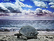 Tortoise Big Turtle On The Tropical Ocean Beach stock photography