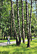 Trees Birch And Grass In Spring In A City Park stock image