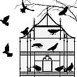 Birds And Birdcage Graphic Silhouettes Over White Background