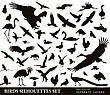 Birds Vector Silhouettes Set. EPS 10 stock vector