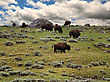 Ferocious Bisons Feeding In The Mountain Against A Dramatic Sky stock image