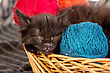 Small Black Kitten Playing With A Red Ball Of Yarn Isolated On A White Background stock photo