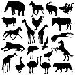 Black Set Silhouettes Zoo Animals Collection On White Background. Vector Illustration stock vector