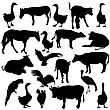 Black Set Silhouettes Zoo Animals Collection On White Background. Vector Illustration