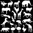 Black Set Silhouettes Zoo Animals Collection On White Background. Vector Illustration stock illustration
