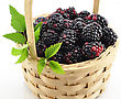 Blackberries In A Basket On White Background