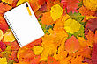Blank Notebook With Pencil On The Autumnal Leaves Background stock photo