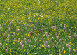 Blooming Field of Flowers stock photo
