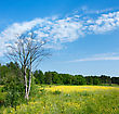 Pastoral Blooming Spring Meadow And Dry Tree, Sky With Clouds stock photo