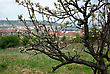 Blooming Tree In Front City Panorama At Spring Sunny Day stock photography