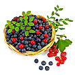 Blueberries With Red Currants In A Wicker Basket, A Sprig Of Blueberries And Red Currants With Green Leaves