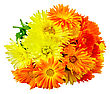 Bouquet Of Calendula Flowers Isolated On White Background