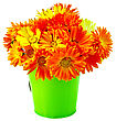 Bouquet Of Calendula Flowers In A Small Green Bucket Isolated On White Background stock photo