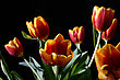 Bouquet Of Colorful Tulips On Dark Background