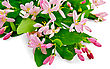 Bouquet Of Honeysuckle Branches With Pink Flowers And Green Leaves stock photo