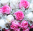 Bouquet Of White And Pink Rose stock photography