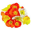 Bouquet Of Orange, Yellow And White Poppies stock image