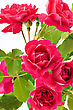 Bouquet Of Red Roses Close Up Background