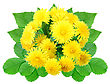 Bouquet Of Yellow Flowers With Green Leaf Nature Ornament Template For Your Design Close-up Studio Photography