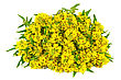 Bouquet Of Yellow Flowers With Green Leaves stock photo