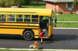 Boy Getting off School Bus and Dog Greeting Him