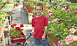 Boy Pulling Wagon of Flowers stock photo