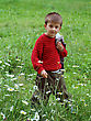 Boy On A Walk, On The Spring Meadow Among The Flowers stock photography