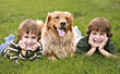 Boys with the Dog stock photo