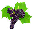 Branch Of Black Grapes With Green Leaf. Isolated Over White