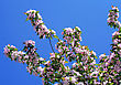 Branch Of Blossoming Tree With Pink Flowers On Blue Sky Background stock photo