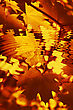 Branch Of Bright Autumn Maple Foliage Reflection In The Water With Ripples stock photography