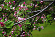 Branch With Fresh Pink Buds At Cold Spring Day. stock photography