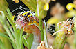Bright Striped Caterpillar On A Withered Flower stock photo