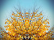 Bright Yellow Abstract Autumn Tree On Sky Background stock image