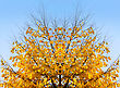 Bright Yellow Abstract Autumn Tree On Sky Background stock photography