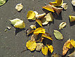 Bright Yellow Autumn Leaves On Pavement stock image