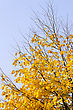 Bright Yellow Autumn Tree On Sky Background stock photography