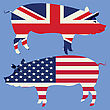 Brittish And American, Stylized Flags With Pig Silhouette