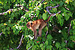 Brown Monkey Sitting At A Green Tree Branches stock image
