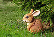 Brown Rabbit Toy In The Green Garden stock image