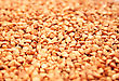 Digestive Buckwheat Grain As A Background. stock image