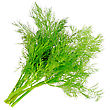 Garnish Bunch Of Dill On White Background. Isolated Over White stock photography