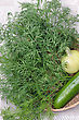 Bunch Of Dill And A Cucumber stock photography