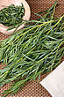 Bunch Tarragon, Used In Cooking And Medicine Plants stock photography