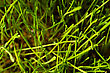 Bush Of Green Grass Closeup Macro Shoot stock photo