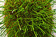 Bush Of Green Grass View From Top stock image